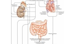 Lee más sobre el artículo Albúmina en cirrhosis